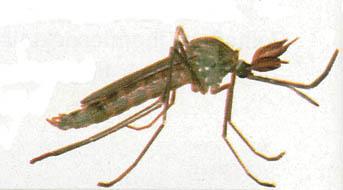helfen mückenstecker gegen mücken